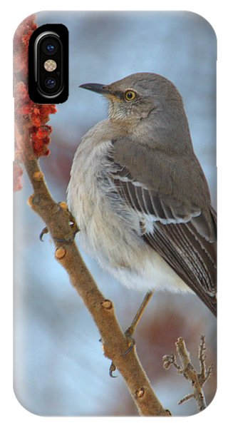 IPhone Case featuring the photograph Northern Mockingbird by Debbie Stahre