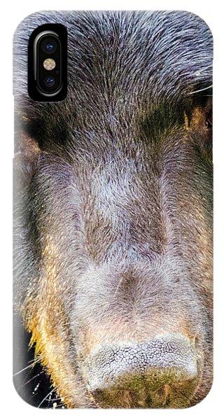 Nosy Bear IPhone Case