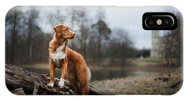 Purebred iPhone Case - Nova Scotia Duck Tolling Retriever Dog by Dezy