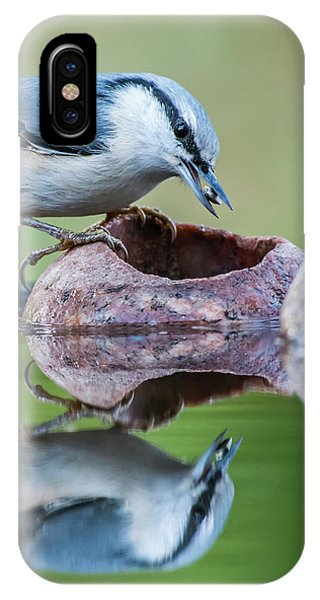 Nuthatch's Catch IPhone Case