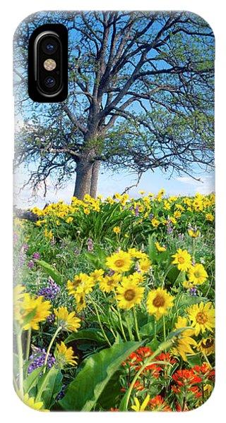 Oak Tree, Arrowleaf Balsam Root Phone Case by Stuart Westmorland
