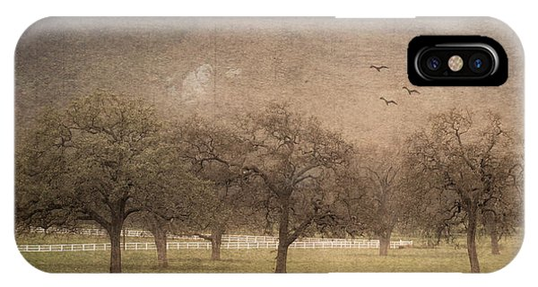 Oak Trees In Fog IPhone Case