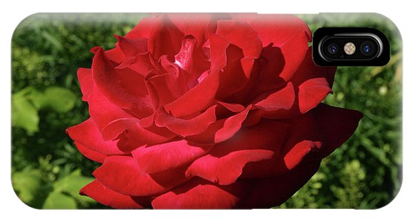 Oh The Blood Red Rose IPhone Case