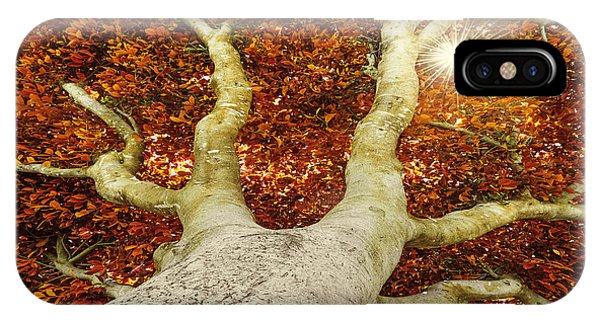 Orange Color iPhone Case - Old Tree In Autumn by Kuttelvaserova Stuchelova