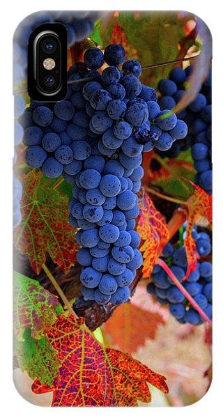 On The Vine II IPhone Case