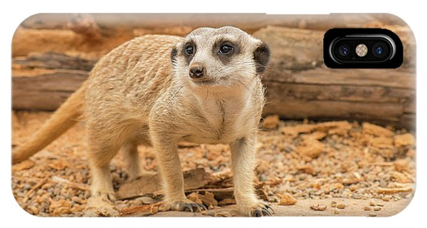 One Meerkat Looking Around. IPhone Case