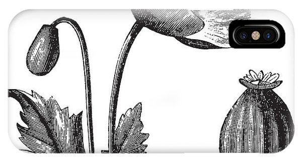 Seeds iPhone Case - Opium Poppy Or Papaver Somniferum by Morphart Creation