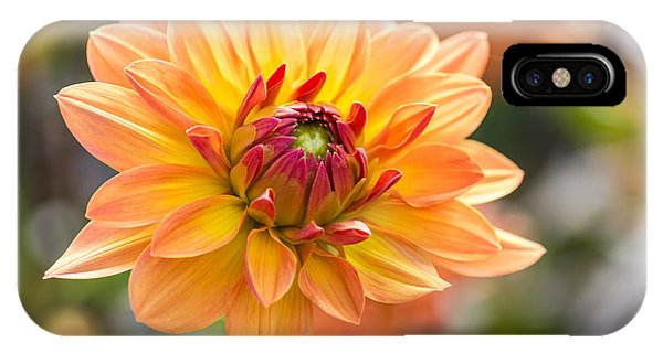 Orange Color iPhone Case - Orange Flower Chrysanthemum, Purple by Echoevg