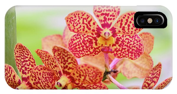 Orange Spotted Orchids IPhone Case