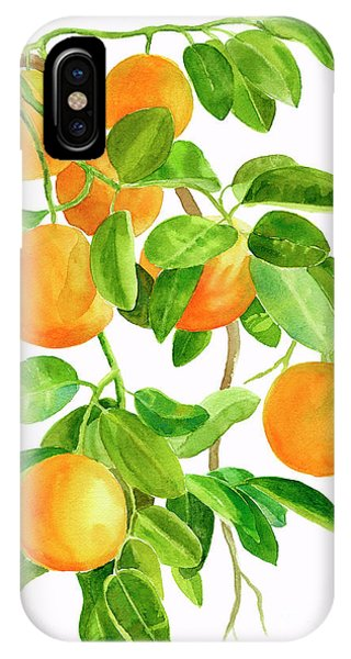 Fruit iPhone Case - Oranges On A Branch by Sharon Freeman
