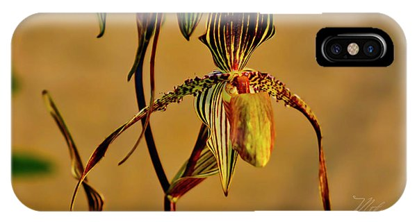 Orchid Study Eight IPhone Case