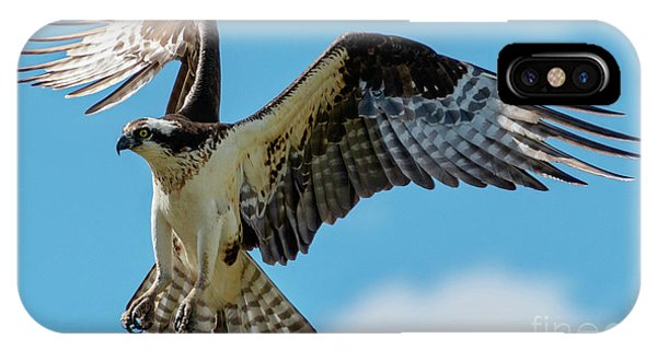 Ospreys iPhone Case - Osprey Hover by Mike Dawson