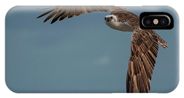 IPhone Case featuring the photograph Osprey by Thomas Kallmeyer