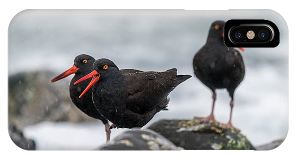 Oystercatchers In The Rain IPhone Case