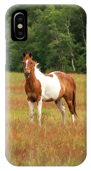 Paint Horse In Pasture IPhone Case