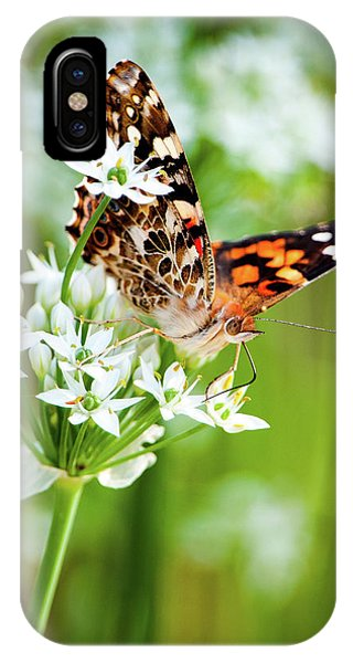 Painted Lady II IPhone Case
