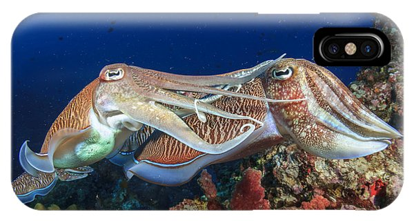 Shooting iPhone Case - Pair Cuttlefish Mating by Rich Carey