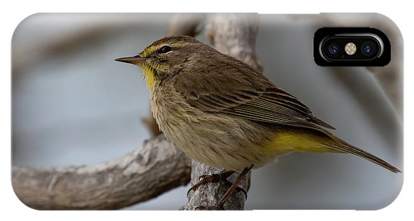 IPhone Case featuring the photograph Palm Warbler by Thomas Kallmeyer