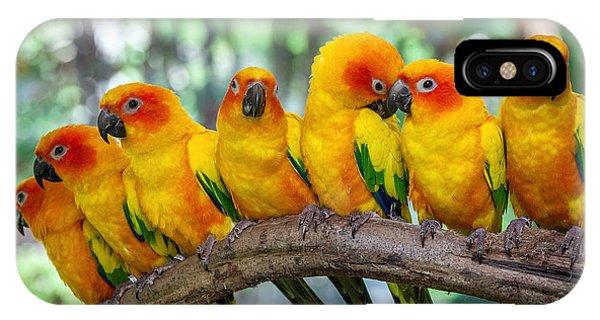 Parrots iPhone Case - Parrot by Apple2499