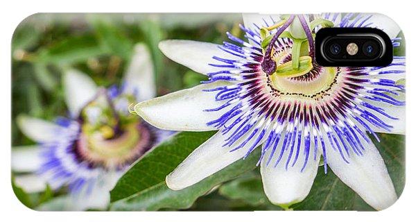 Botanical Garden iPhone Case - Passion Flower Passiflora by Resul Muslu