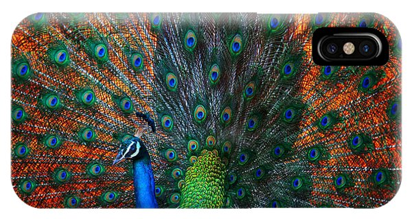 Peafowl iPhone Case - Peacock Showing Feathers On The Bright by Dudarev Mikhail