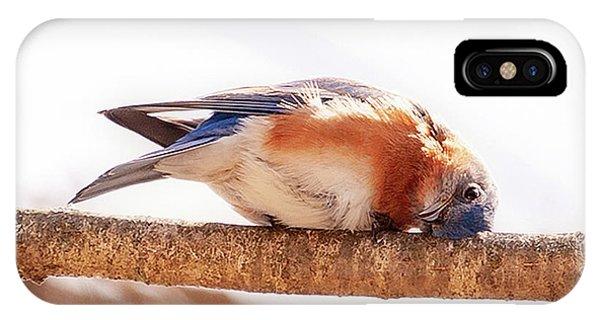 Peek-a-boo Blue Bird IPhone Case