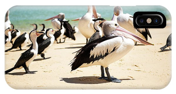 IPhone Case featuring the photograph Pelicans During The Day by Rob D Imagery