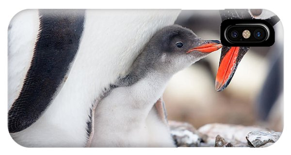 Small iPhone Case - Penguin In Its Nest To Protect Her Cub by Volodymyr Goinyk