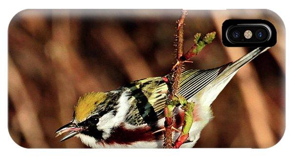 Perky Little Warbler IPhone Case