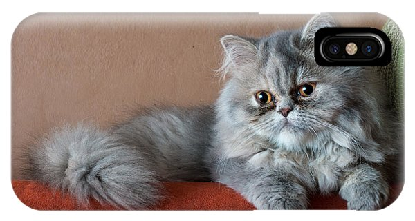 Purebred iPhone Case - Persian Cat On The Couch by Valerio Pardi