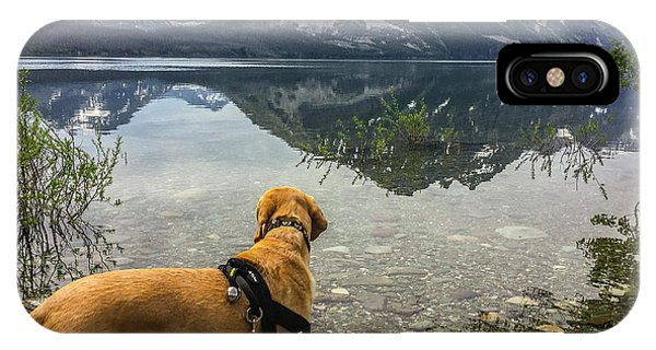 IPhone Case featuring the photograph Photo Dog Jackson At Glacier by Matthew Irvin