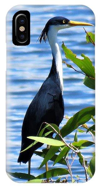 Pied Heron Tree IPhone Case