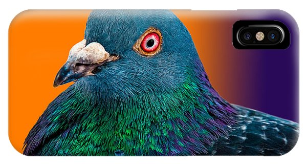 Grey Background iPhone Case - Pigeon Close Up Portrait Isolated In by Altin Osmanaj