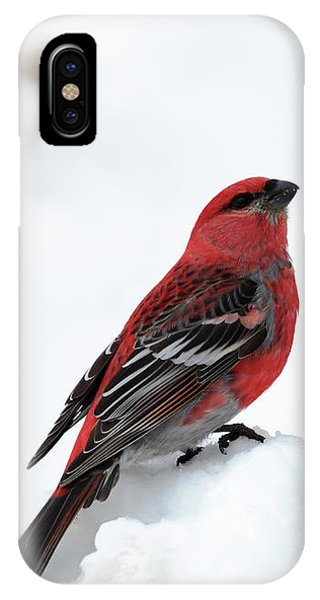 IPhone Case featuring the photograph Pine Grosbeak In The Snow by Susan Rissi Tregoning