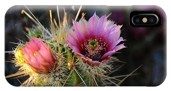 Pink Cactus Flower IPhone Case