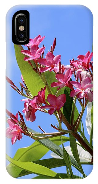 iPhone Case - Pink Plumeria With Blue Sky by Carol Groenen