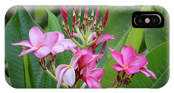 iPhone Case - Pink Plumeria With Leaves by Carol Groenen