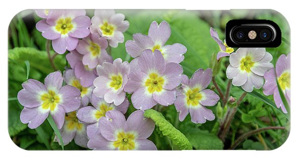 Pink Primroses In Devon IPhone Case