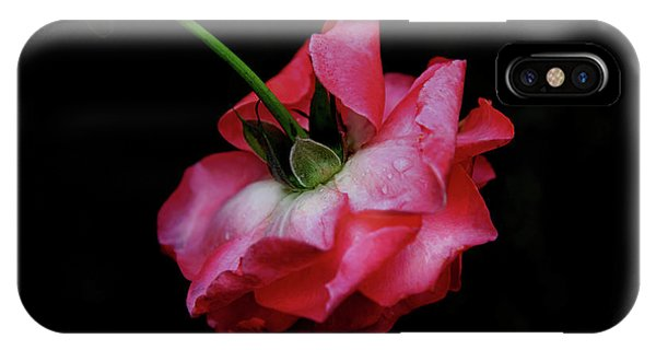 Battery D iPhone Case - Pink Rose Takes A Bow by Anita Faye