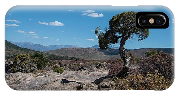 Pinyon Pine With North Rim In Background Black Canyon Of The Gunnison IPhone Case