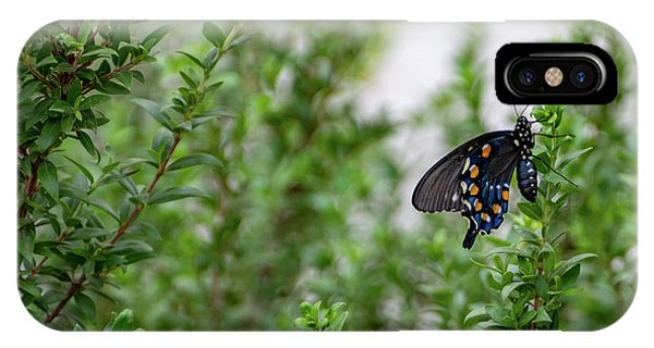 Pipevine Swallowtail IPhone Case