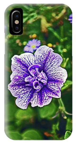 Pitlochry.  Purple Petunia. IPhone Case