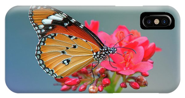 Plain Tiger Or African Monarch Butterfly Dthn0246 IPhone Case