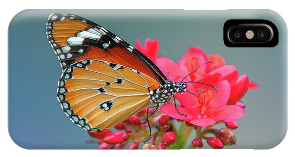IPhone Case featuring the photograph Plain Tiger Or African Monarch Butterfly Dthn0246 by Gerry Gantt