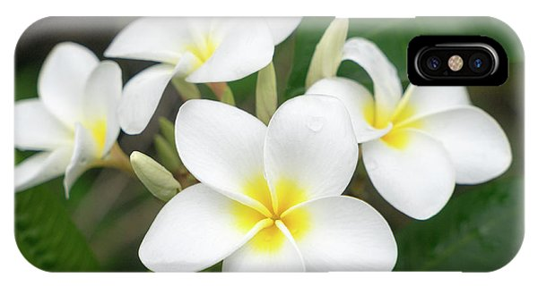 Pleasing Plumeria IPhone Case