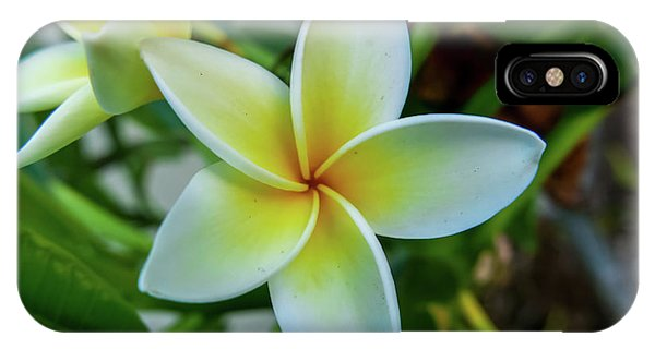 Plumeria In Bloom IPhone Case