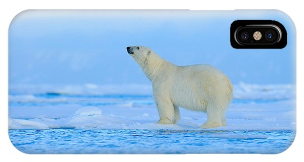 Clear iPhone Case - Polar Bear, Dangerous Looking Beast On by Ondrej Prosicky
