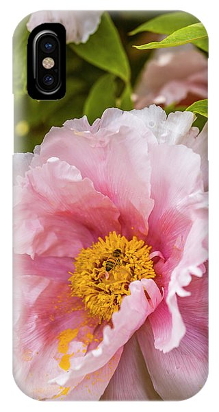 Pollen Trap Sprung IPhone Case
