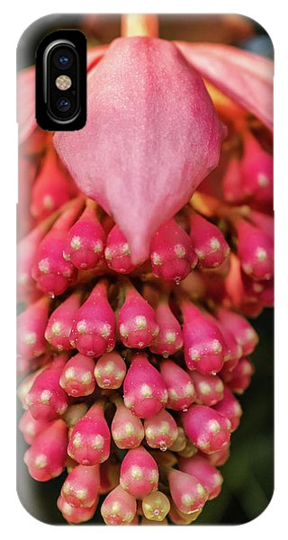 Pomegranate Flower IPhone Case