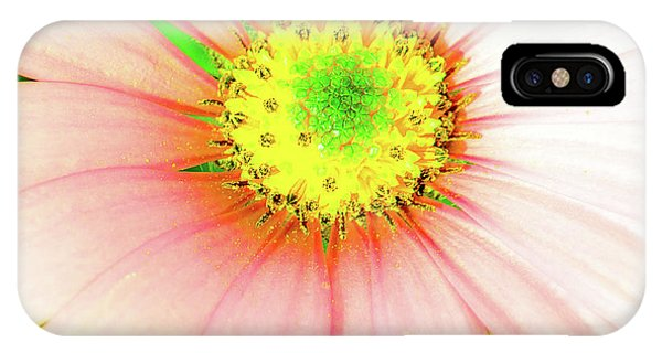 Pop Art Osteospermum 1 IPhone Case